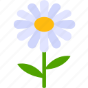 chain, daisy, flora, floral, florist, flower, garden icon