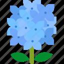floral, florist, flower, garden, hydrangea, nature