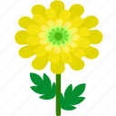 chrysanthemum, floral, florist, flower, garden, nature icon