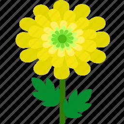chrysanthemum, floral, florist, flower, garden, nature icon