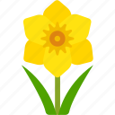 cancer, daffodil, floral, florist, flower, nature icon