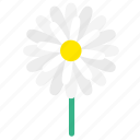 blossom, botany, daisy, floral, flower, flowering plants, wildflower icon