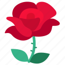 rose, flora, flower, red, valentine, floral, love