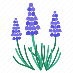 flora, flower, fragrance, garden, grape hyacinth, plant, purple icon
