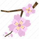 bloom, blossom, cherry blossom, flower, perennial, pink, sakura icon