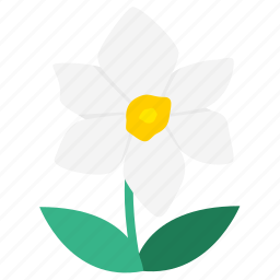 daffodil, flower, flowering plants, flowers, garden, narcissus, wildflower icon