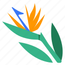 bird of paradise, blooming, crane flower, floral, flower, plant, strelitzia icon