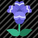 blooming, blossom, floral, flower, garden, bloom, flowers