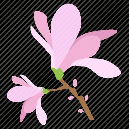blossom, botany, floral, flower, magnolia, plant, tree icon