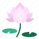 aquatic plant, blooming, corbel, flower, lotus, lotus blossom, tropical icon