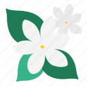 bloom, floral, flower, garden, jasmine, plant, wildflower icon