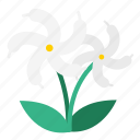bloom, flora, flower, garden, jasmine, plant, sampaguita jasmine icon