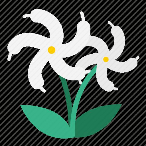 bloom, flora, flower, garden, jasmine, plant, sampaguita jasmine icon