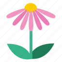 blooming, coneflower, echinacea, floral, flower, plant, wildflower icon