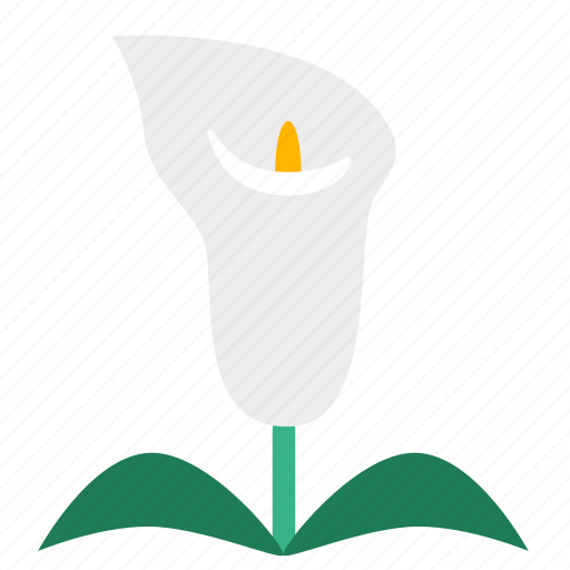 arum lily, bloom, calla lily, flora, floral, flower, plant icon