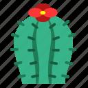 blossom, cactus, flower, garden, nature, plant, succulent icon