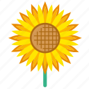 summer, flower, garden, sunflower, blossom, bloom, floral icon