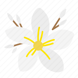 bloom, flora, flower, fragrant, frangipani, plant, plumeria icon
