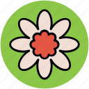 bluestar, flower, puschkinia, puschkinia flower, puschkinia libanotica, spring flower icon