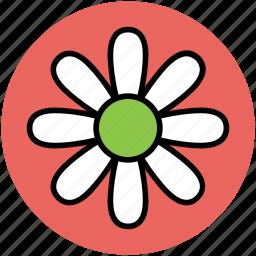 bloodroot, bloodroot flower, flower, spring flower icon