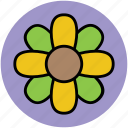 clover, floral, flower, irish clovers, leaves flower, luck flower icon