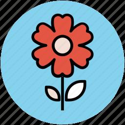 anemone, anemone flower, flower, flower with stem, spring flower icon