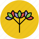 branch, flowering twig, limb, offshoot, shoot icon
