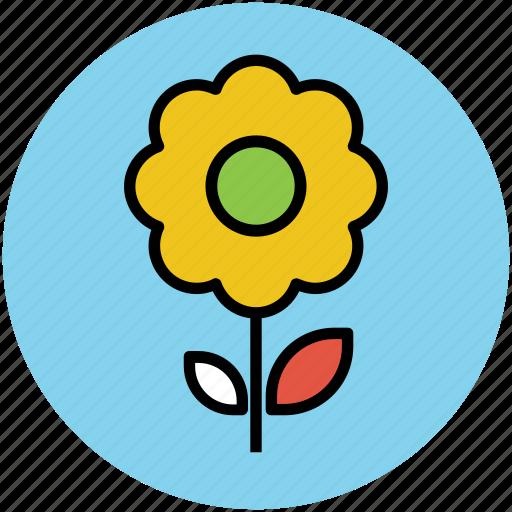 daisy, daisy on stem, flower, single daisy, stem daisy, stem flower icon
