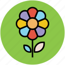 daisy, daisy on stem, flower, single daisy, stem daisy, stem flower icon