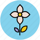 beauty, flower with stem, kousa dogwood, kousa flower, nature icon