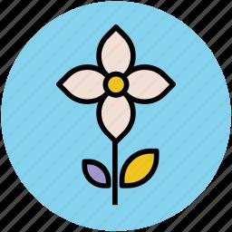 beauty, flower with stem, kousa dogwood, kousa flower, nature icon