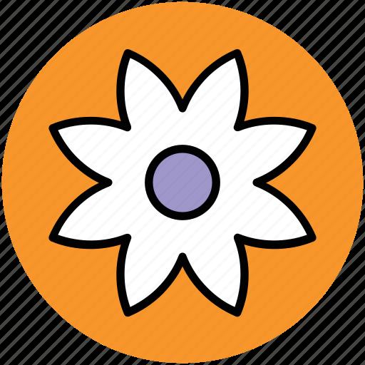 flower, hoya bella, hoya flower, hoya wax flower, wax flower icon