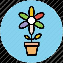bluestar, flowering plant, plant pot, puschkinia, puschkinia flower, puschkinia libanotica, spring flower icon