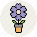 anemone, anemone plant, flower, plant pot, spring flower icon