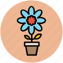 beauty, gerbera, gerbera daisy, nature, plant, plant pot icon
