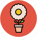 beauty, flowering plant, nature, plant, plant pot, potted plant icon