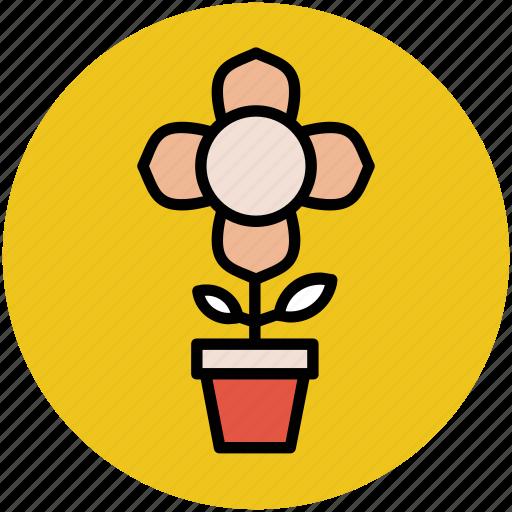 beauty, flowering plant, nature, plant, plant pot, potted plant icon