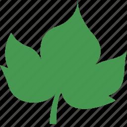 grape, leaf icon
