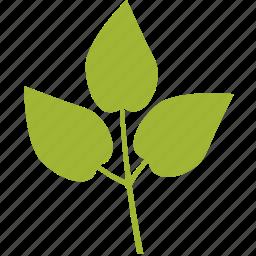 leaf, leaves icon