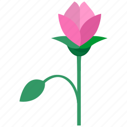 bloom, decoration, flower, garden, leaves, nature, rose icon