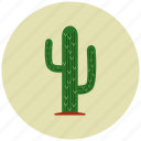 cactus, desert, flower, nature, plant icon