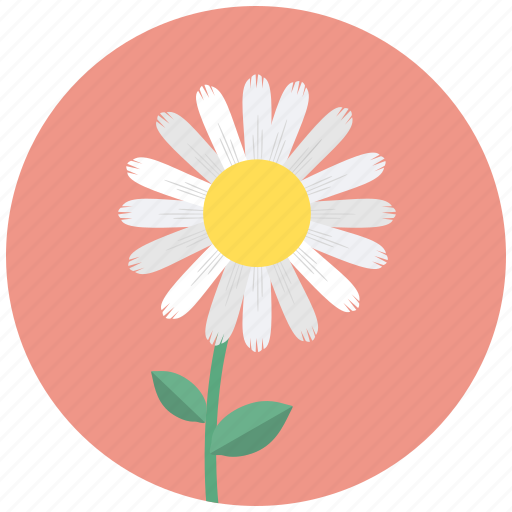 Blossom, camomile, daisy, flower, plant icon - Download on Iconfinder