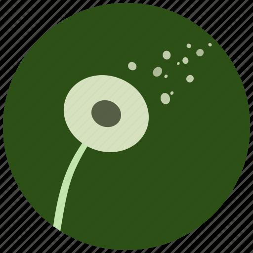 Blossom, dandelion, flower, nature, plant icon - Download on Iconfinder