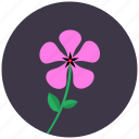 blossom, flower, nature, periwinkle, plant icon