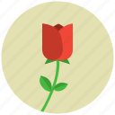blossom, flower, nature, plant, tulip icon