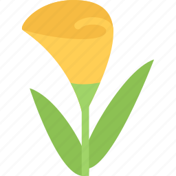 calla, flower, flowers, garden, gardener icon