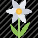 camomile, flower, flowers, garden, gardener icon