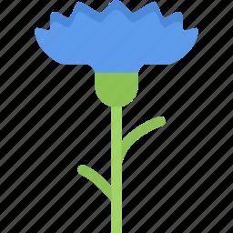 cornflower, flower, flowers, garden, gardener icon
