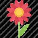 flower, flowers, garden, gardener