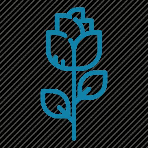bloom, blossom, flower, flowering, flowers, gift, rose icon